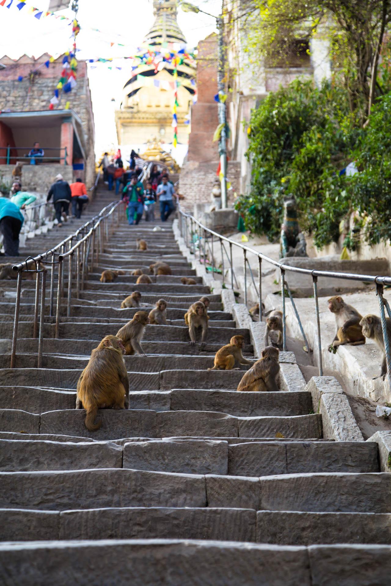 stupa steps