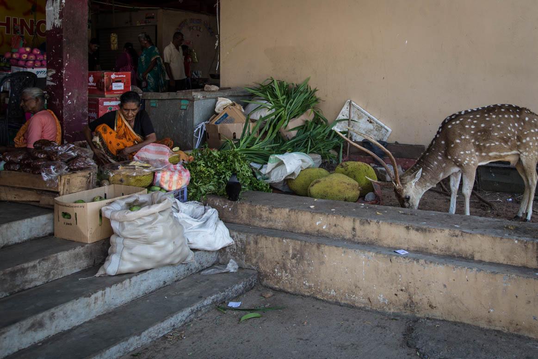 Trincomalee market