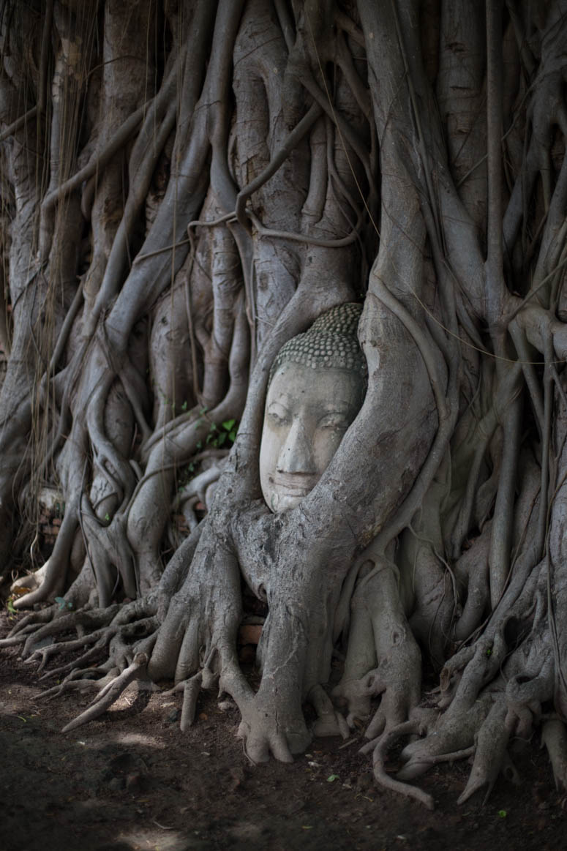 heilige Buddha von Ayutthaya
