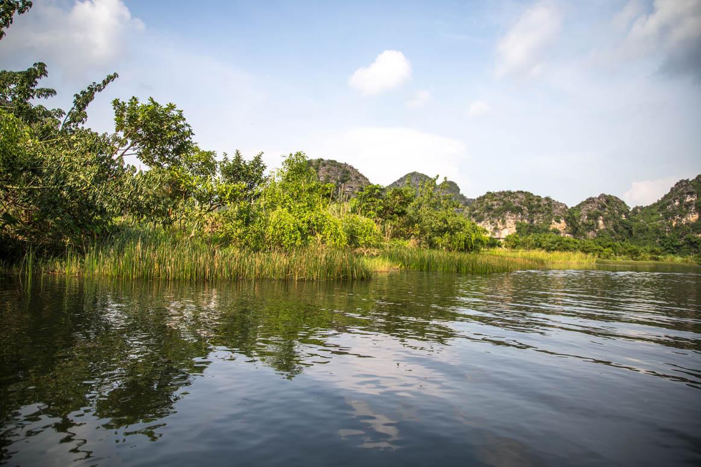 Schilfufer in Ninh Binh