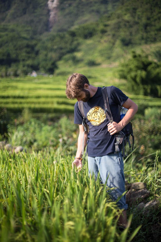 Reisfelder berühren