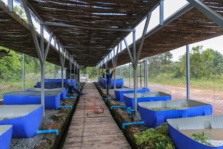Koh Kong Turtle Sanctuary