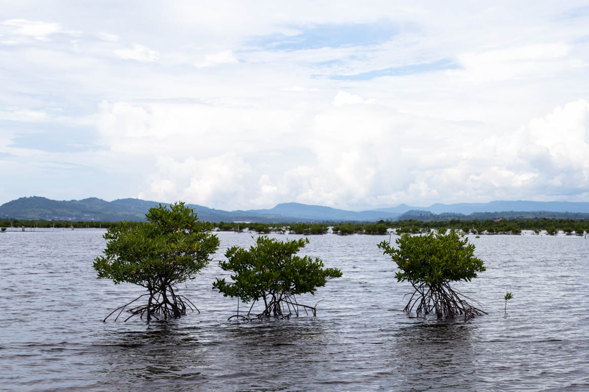 Nature in Koh Kong