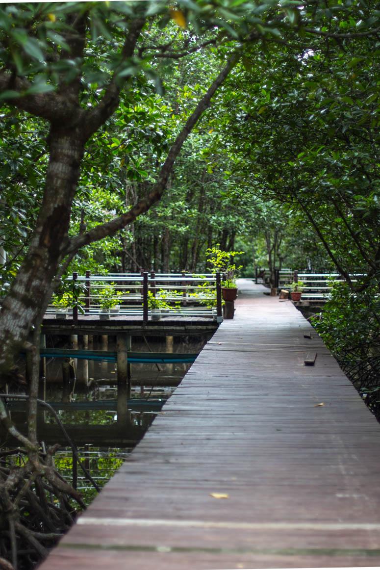 Mangrove forest at Koh Kong