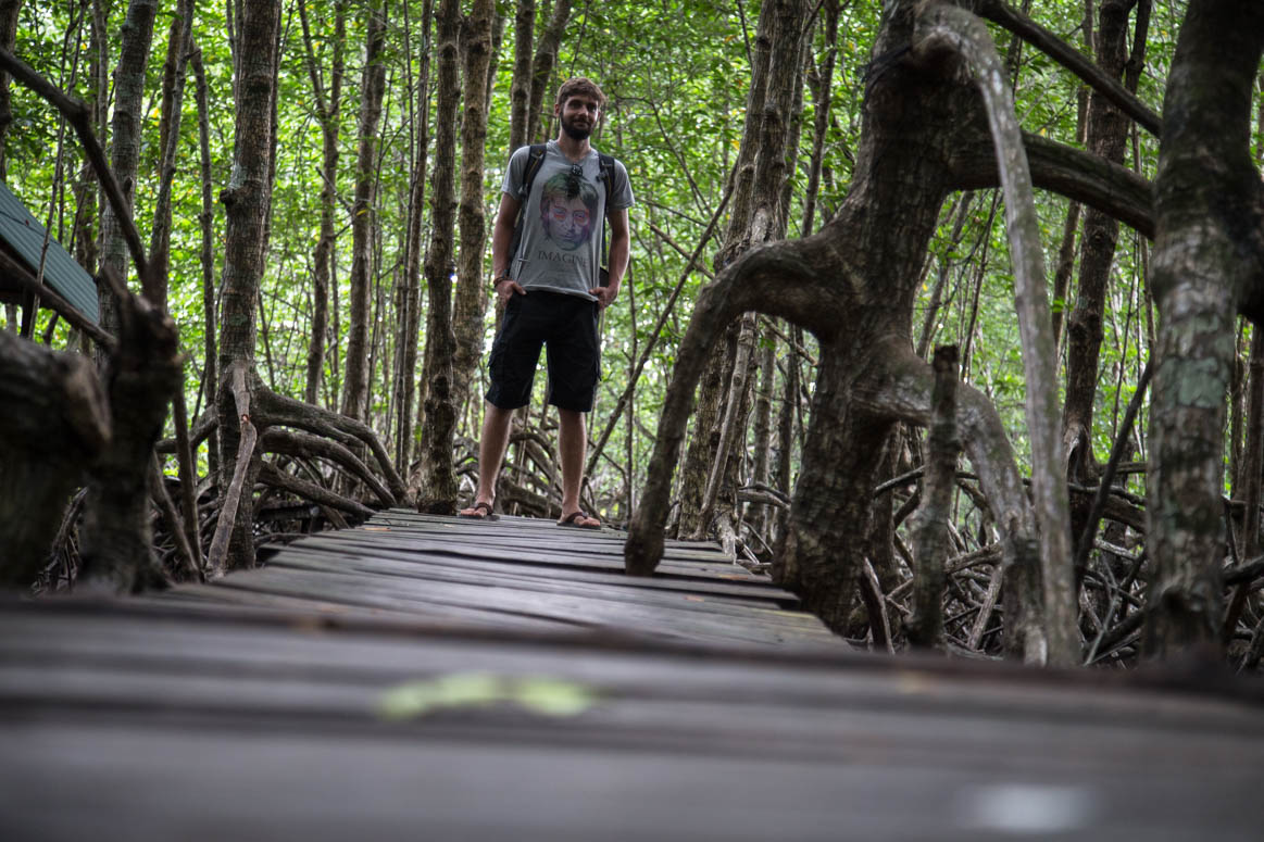 Mangrove forest path