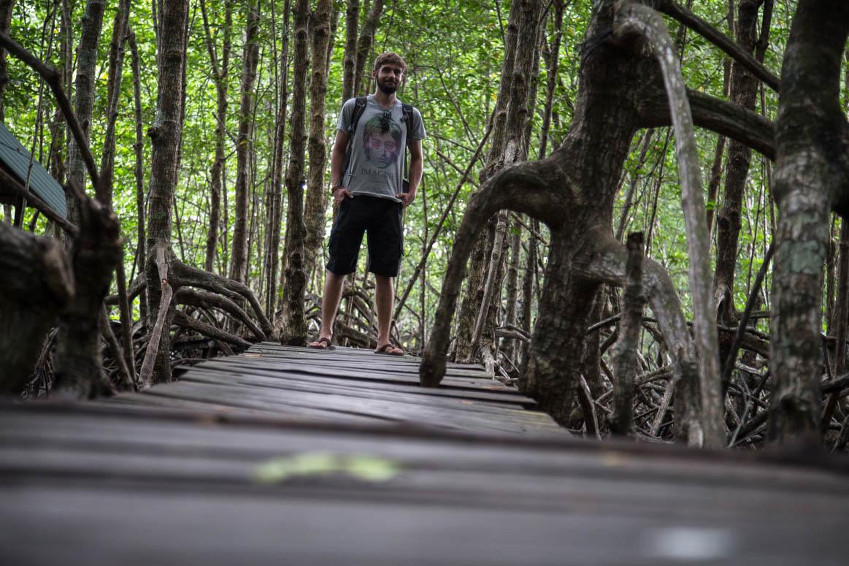 Mangrove forest path