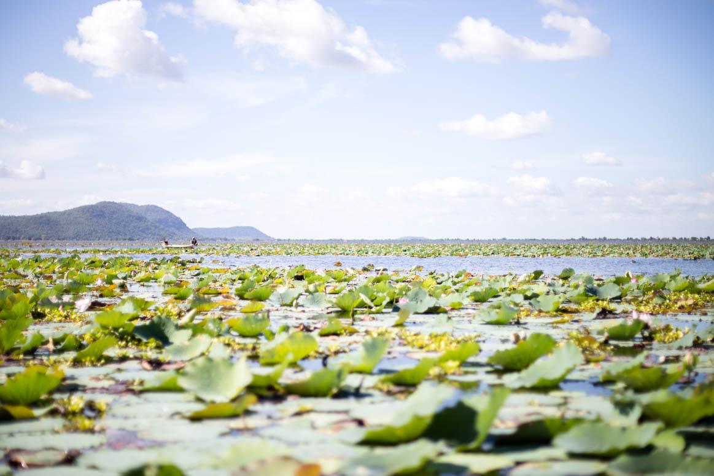 Während einer Bootsfahrt auf einem Stausee bekamen wir eine Lotusfarm zu sehen