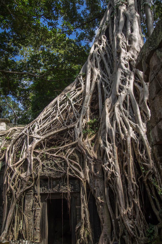 Natur und Architektur
