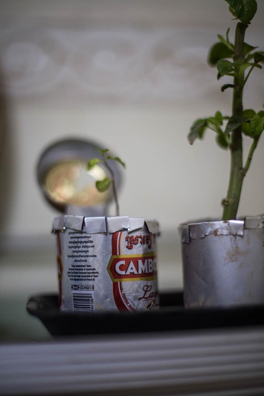 Bierpflanzen