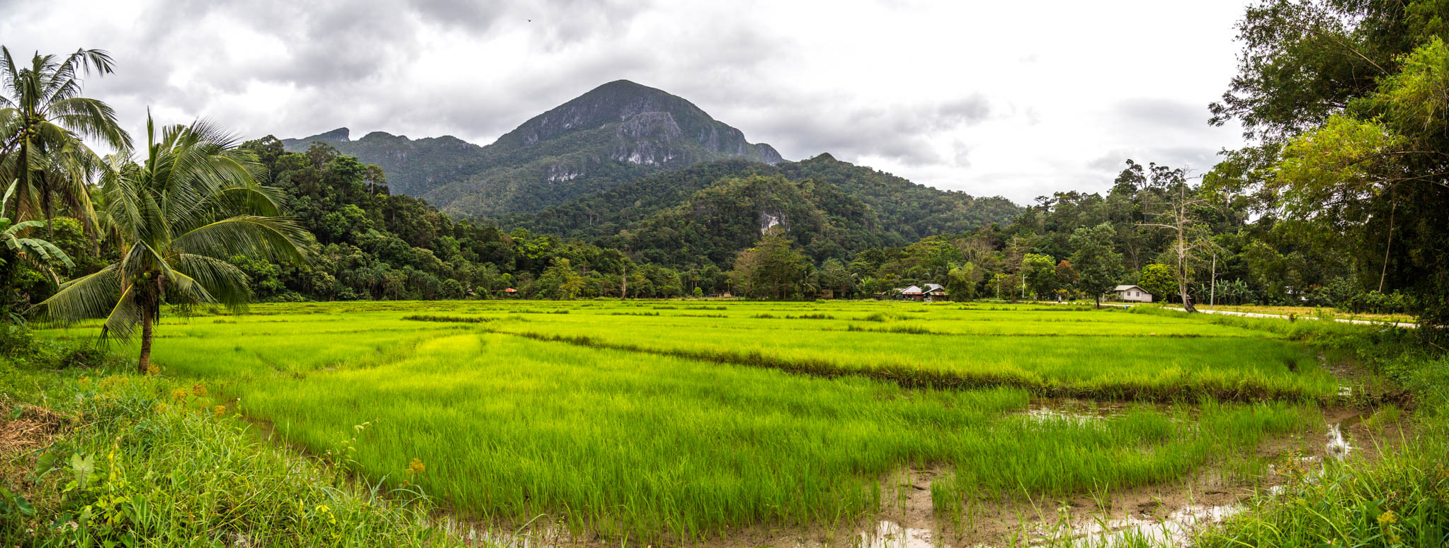 Reisfelder in Sabang