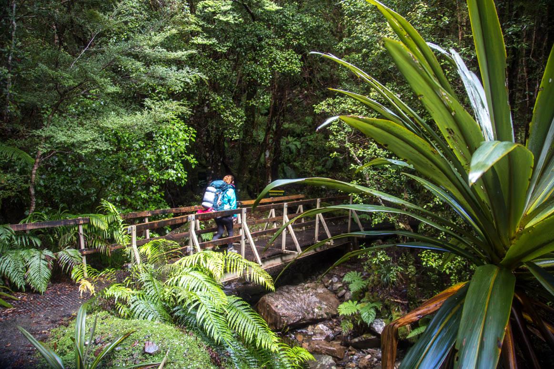 der Dschungel Neuseelands