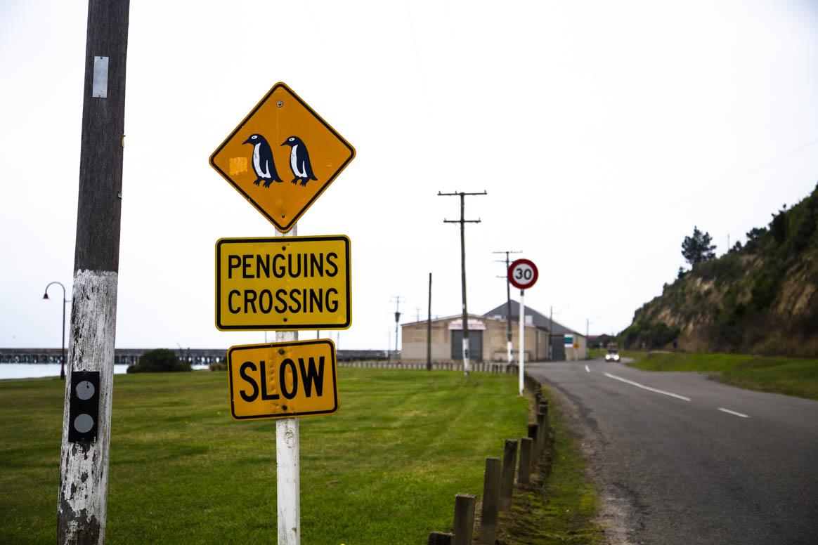 Pinguine gesichtet